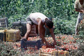 Agricoltura, morti sul lavoro in aumento