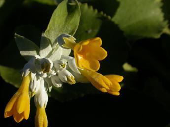 Elette le 20 piante simbolo delle regioni italiane