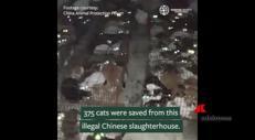 Gatti in gabbia salvati dal macello