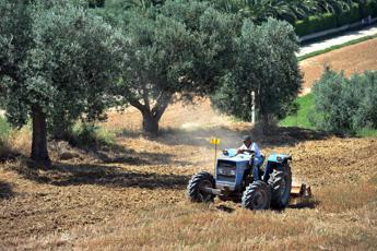Accordo Confagricoltura-Israele per crescita imprese