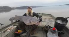 Pesce gatto da 40 Kg, record nel Kentucky Lake