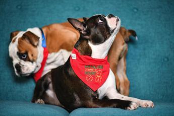 Nel muso del bulldog la chiave per una rara malattia