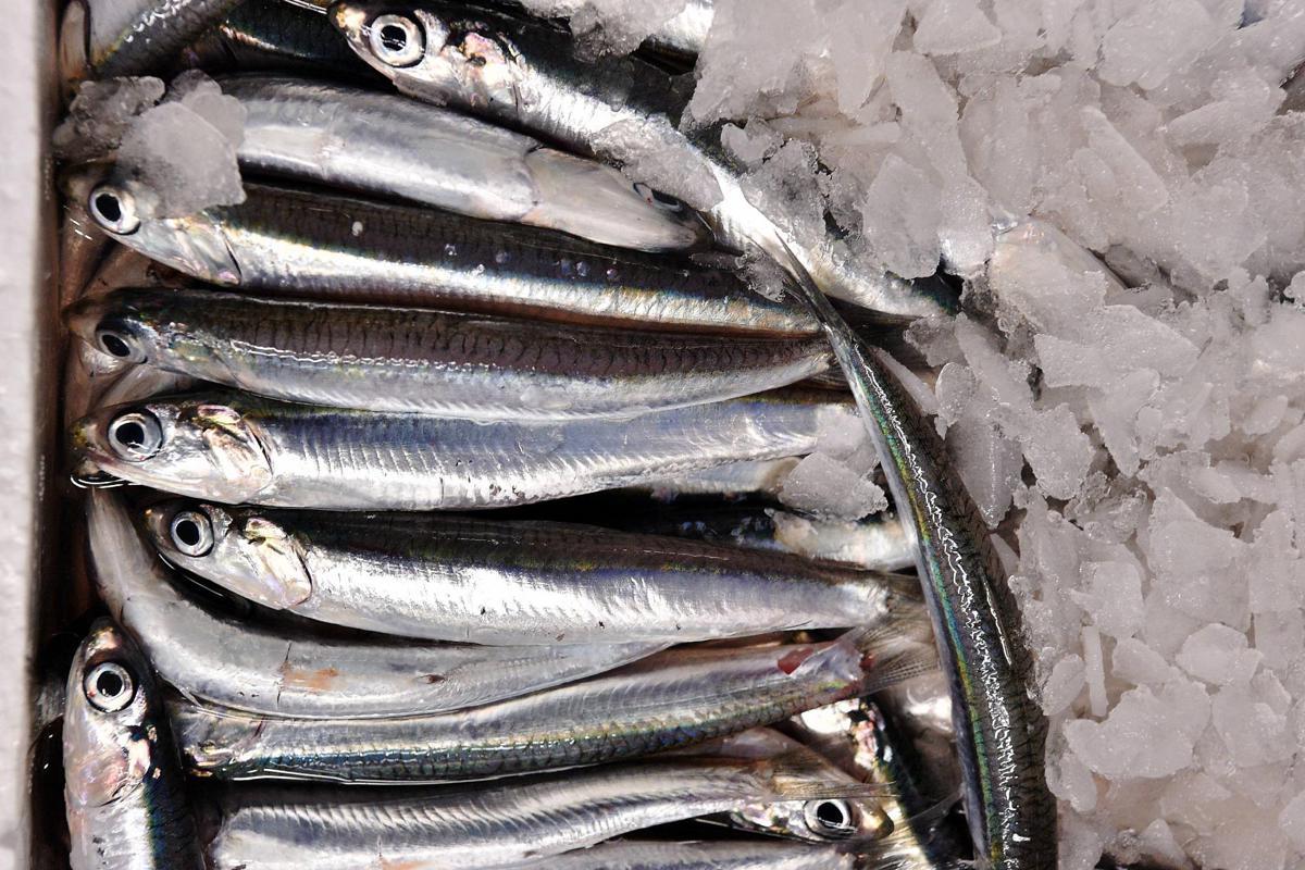 singolo pesce sito di incontri incontri di carte