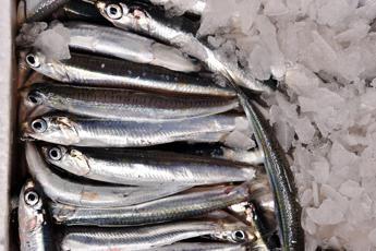 Stop a pesce fresco in Adriatico