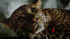 In 'Wildlife' gli scatti più belli della natura selvaggia