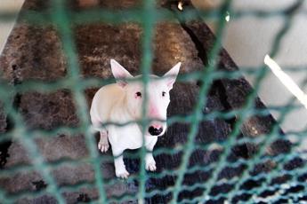 Soffocato dalla catena, muore cane: padrone denunciato