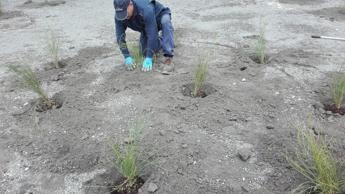 Cava Ranieri, 500 piante per l'ex discarica