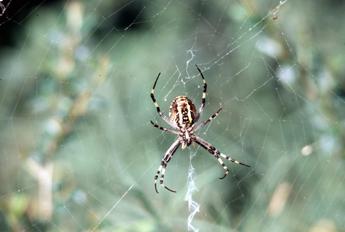 Ispirato ai ragni nuovo nastro biadesivo per sigillare le ferite