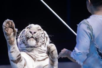 I pro e contro di un circo senza animali