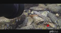 Lago di Como a 'secco', l'appello in diretta dal fondale