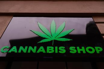 Cannabis light, parla il medico