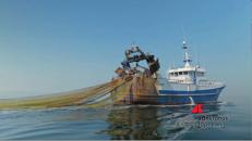 Il pesce italiano sta finendo, l'80 per cento è importato