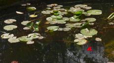 Tra i fiori di Boboli, alla scoperta dei tesori botanici dei Medici