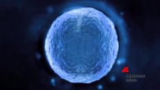 Scommessa Car-T, dai tumore del sangue a quelli solidi
