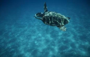 Bagnanti, non disturbate le tartarughe marine