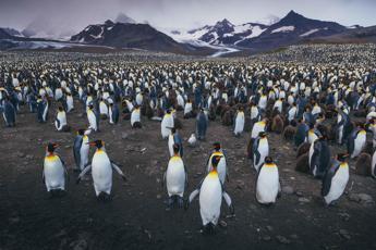 Inquinamento, pinguini sempre più a rischio