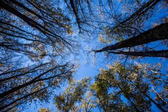 Costa nomina i presidenti di 5 parchi nazionali