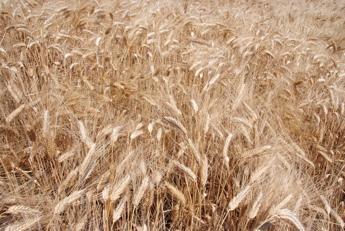 Giansanti (Confagricoltura): 'Ruolo centrale delle imprese agricole in 'Farming for future' per obiettivi green