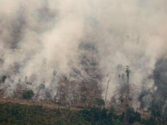 Incendi, colpite tre ecoregioni del Pianeta
