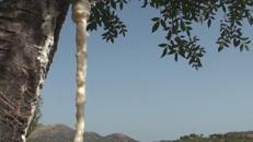 La linfa di un popolo, così la manna fa rinascere le terre di Sicilia