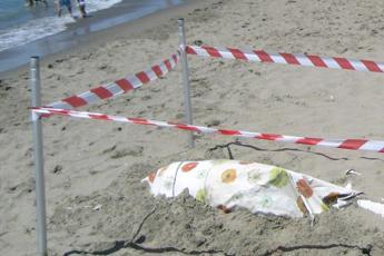 Delfino trovato morto a Ostia