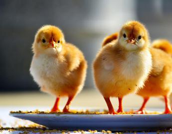 Baci e coccole a galline, boom di casi di salmonella