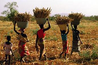 IFAD to support Cameroon's small farmers