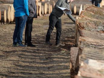 'Nel 2018 produzione record dei prodotti in legno'