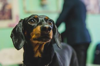 Veterinario confonde numeri di telefono dei padroni e sopprime il cane sbagliato