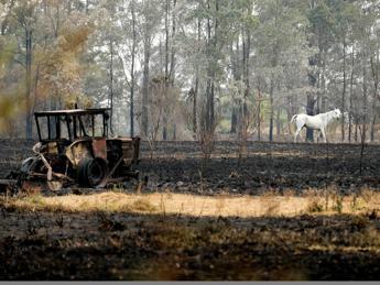 Wwf: 3 miliardi di animali colpiti dagli incendi in Australia