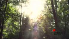 Le foreste, il nostro antivirus