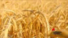 Covid-19, l'agricoltura in difficoltà