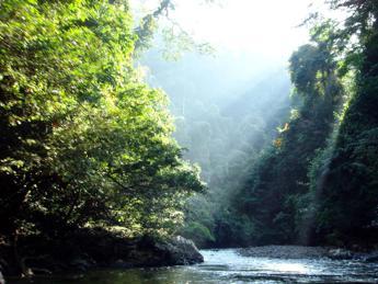 Rapporto Onu, dal 1990 persi 420 milioni di ettari di foresta