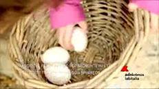 Filiera avicola resiliente