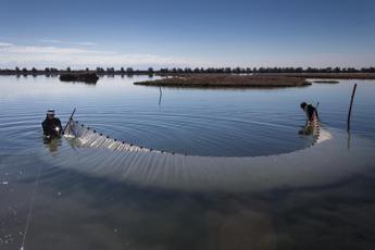 Acqua dolce nella Laguna di Venezia per ripopolarla di pesci e uccelli