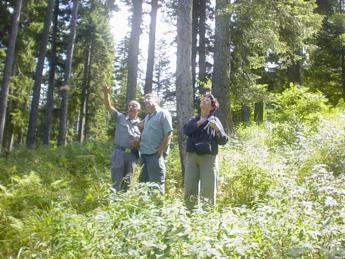Sostenibilità: estate tra i boschi, il decalogo di Pefc Italia