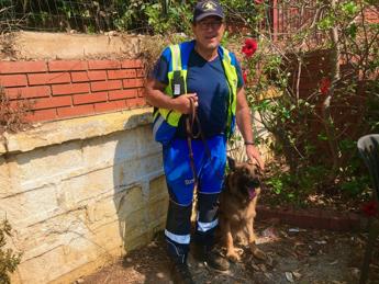 Asia, il cane pastore tedesco che da una settimana cerca il piccolo Gioele