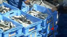 La piccola pesca divorata dal sovrasfruttamento degli stock ittici