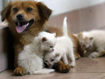Capodanno 2020, la guida Lav per gli amici animali